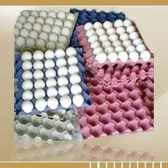 China White Shell Eggs on sale