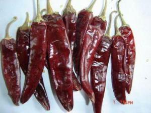 China jinta chilli on sale