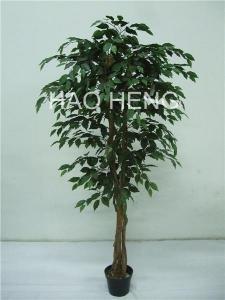 China 6'FICUS TREE on sale