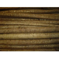 China Fresh burdock on sale