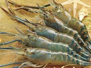 China Crawfish on sale