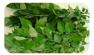 China Curry Leaves on sale