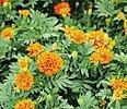 China Flower Beds on sale