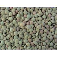 Small Black Kidney Beans (Blac Lentil