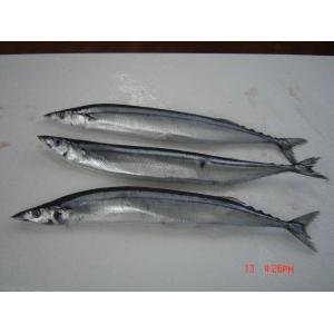 Fish Pacific saury