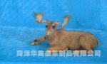 Deer >>>DETAILS>>> DR550