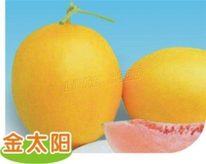 China Western Type Golden Sun 〗 on sale