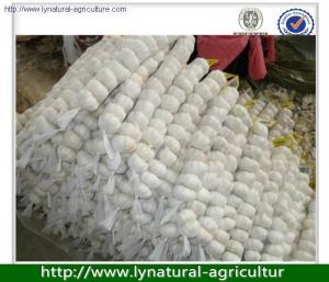 China 2013 fresh white garlic exporter in china on sale