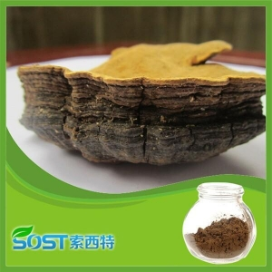 China Phellinus igniarius on sale