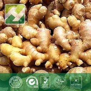 China Ginger Root Extract Gingerols on sale