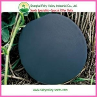 China Hot Sale Black Peel Round Shape Red Watermelon seeds For Growing on sale