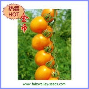 China Early Mature Yellow cherry tomato seeds 25g  Gold Coin on sale