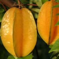 China Freeze Dried Star Fruit Powder on sale