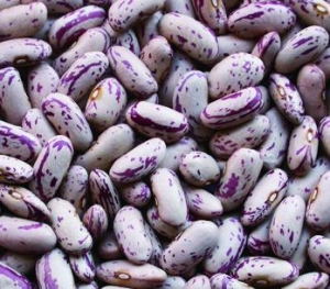 China BEANS LIGHT SPECKLED KIDNEY BEANS(LONG SHAPE) on sale