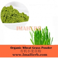 China Organic Wheat Grass Powder on sale