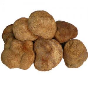 China Improve Sleep hs0195hs-Lions mane mushroom extract on sale