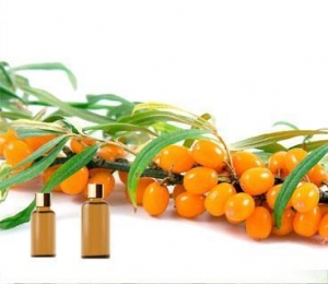 China Essential Oils Seabuckthorn Oil on sale