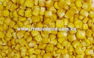 China Freeze Dried Vegetable Freeze Dried Sweet Corn on sale