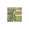 China Early Su pear green pears wholesale sweet Chinese pears for India for sale