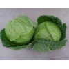 China cabbage for sale