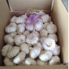 China Fresh Pure White Garlic 5.0cm Packed In Carton for sale