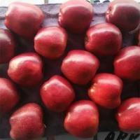 Fresh apple fresh fruit Huaniu apple