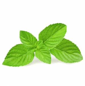 China spices powder Mint Seasoning Powder on sale