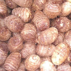 China herbal extract Konjac Extract on sale