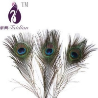 China natural Peacock feathers,plume feathers for decoration on sale