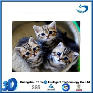 China Animal Lenticular plastic 3d painting animal of cats on sale