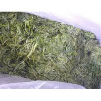 China Seaweed salad raw wakame stem cut salted on sale