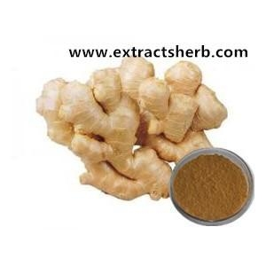 China Fruit&Vegetable extract Powder Ginger Extract USD1-100/Kilogram on sale