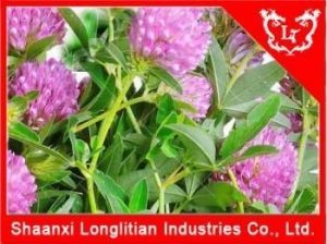 China Estrogen Hormone Supplement Red clover extract Manufacturer on sale