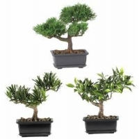 China 8.5 Bonsai Silk Plant Collection, Set of 3 on sale