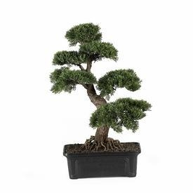 China 24 Silk Cedar Bonsai on sale