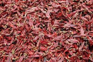 China Dry chili name:Jinta chilli on sale