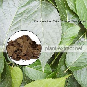 China Chlorogenic Acid Powder Plant Extract on sale