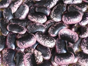 China Large Black Speckled Kidney Beans on sale