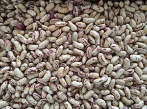 China PRODUCTS Light Speckled Kidney Beans Long Shape on sale