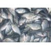 China Spa fish Doctor FISH for sale