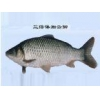 China Fish fry Crucian for sale