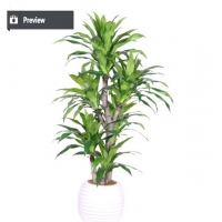 China Best selling items large plastic ficus bonsai tree for outdoo on sale