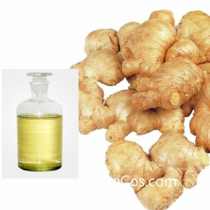 China High Quality 100% Natural Ginger Essential Oil/ Ginger Root Oil on sale