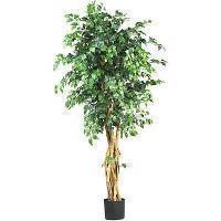 China nearly natural Silk Palace Ficus Tree on sale