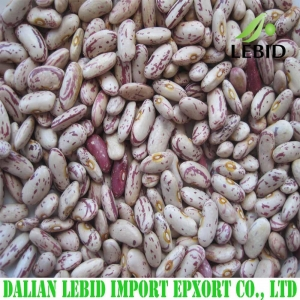 China Light Speckled Kidney Beans Long Shape on sale