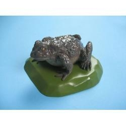 China Anatomical Models Toad Model on sale