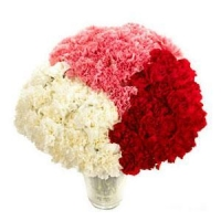 Red Pink And White Carnations NO.99