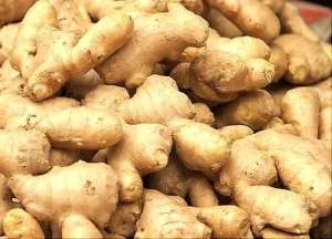 China Ginger Extract/Ginger Root Extract on sale