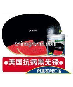 China Black pioneer-watermelon seeds on sale