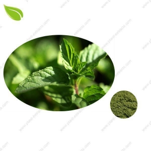 China Mint Seasoning Powder >spices powder on sale